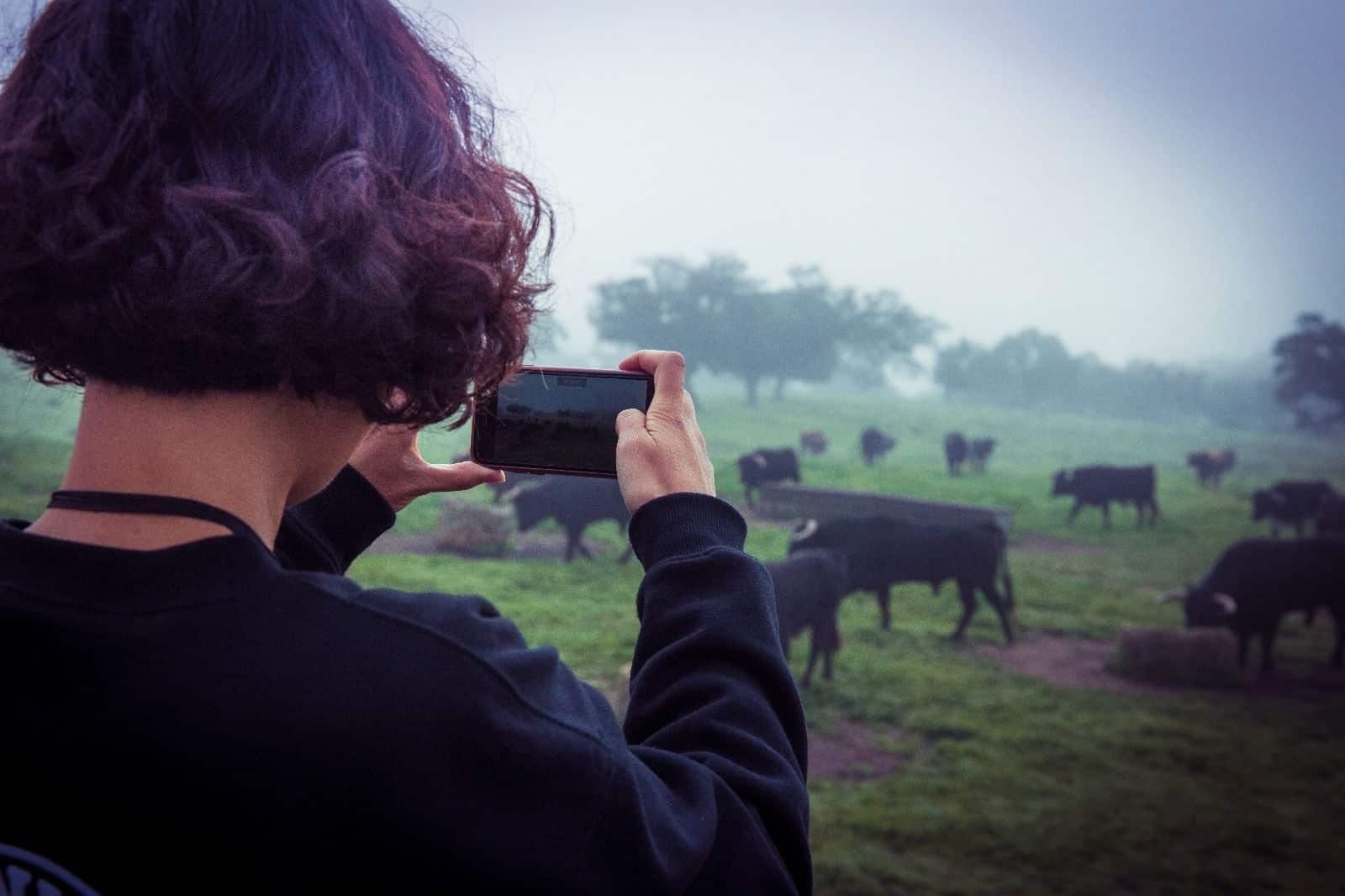 Visitante haciendo Fotos a Toros
